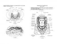 Guía de la Dame de Elche